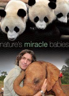 BBC:大自然的神奇宝贝
