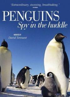 BBC:企鹅间谍