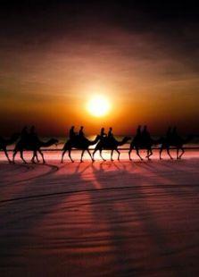 BBC:骆驼比赛