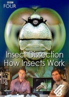 BBC:昆虫解剖