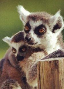 BBC:马达加斯加大冒险