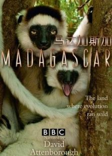 BBC:马达加斯加